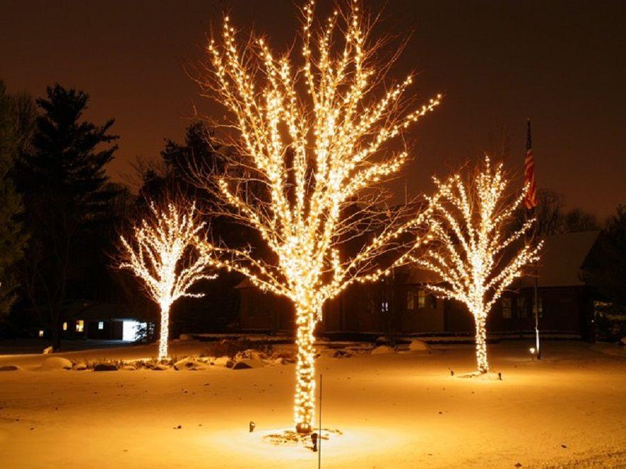 Στολισμένα δέντρα με άσπρα λαμπάκια