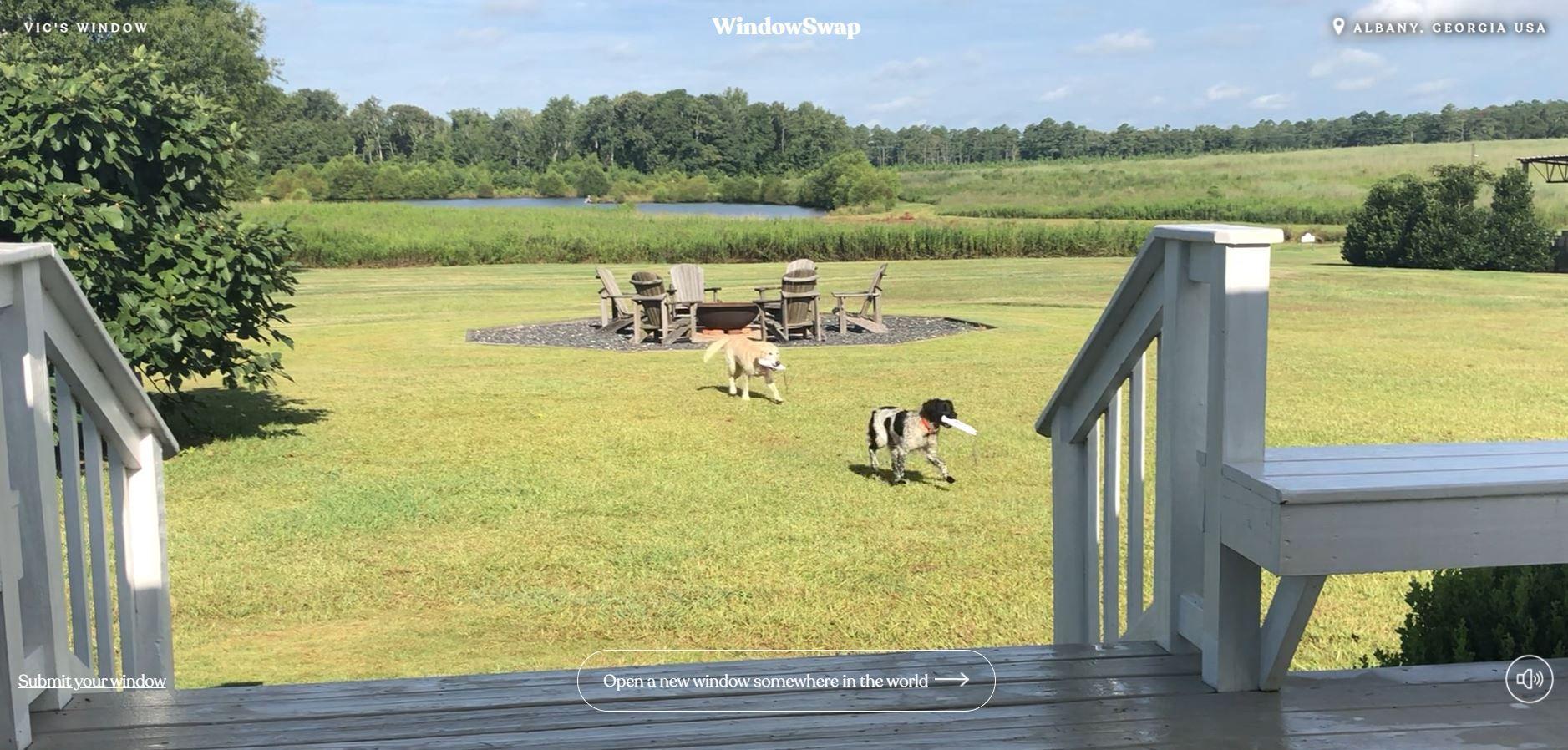 Στιγμιότυπο από παράθυρο στην Αμερική που δείχνει δύο σκυλιά στην εξοχή μέσω της εφαρμογής Window Swap