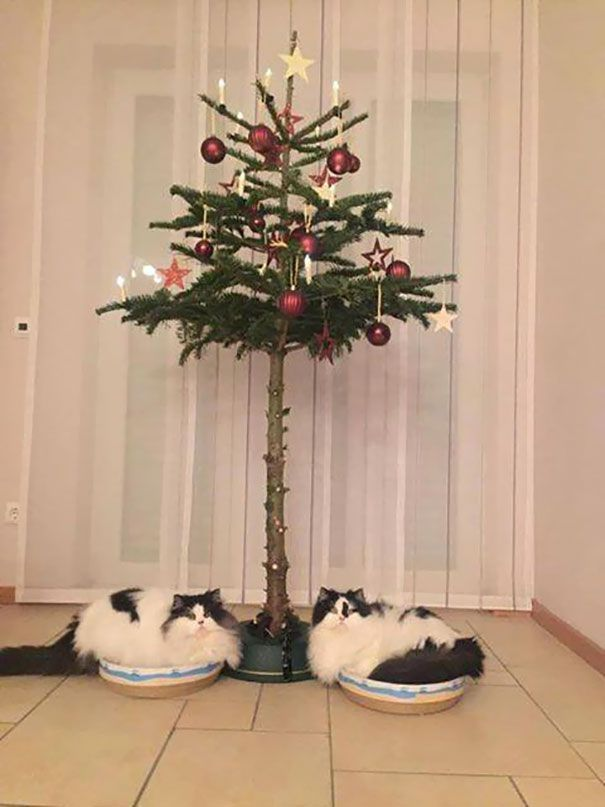Δύο γάτες κάθονται κάτω από ένα χριστουγεννιάτικο δέντρο στολισμένο μόνο στο πάνω μέρος