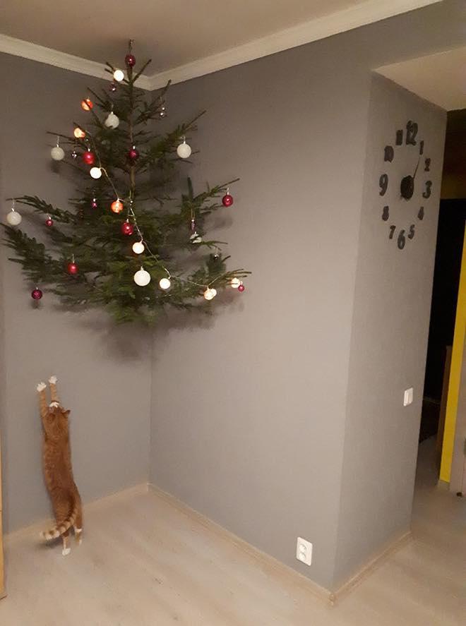Γάτα προσπαθεί να φτάσει χρισουγεννιάτικο δέντρο που κρέμεται στο ταβάνι
