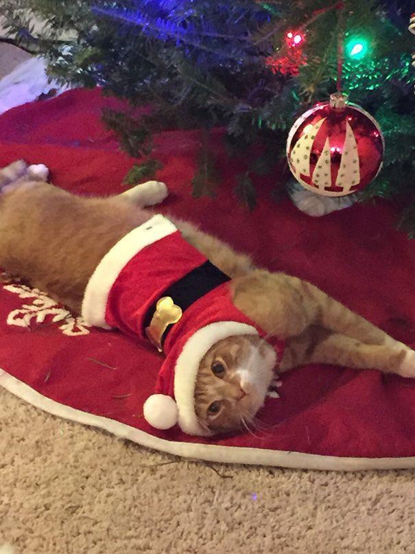 Γάτα ντυμένη χριστουγεννιάτικα είναι ξαπλωμλενη μπροστά από δέντρο
