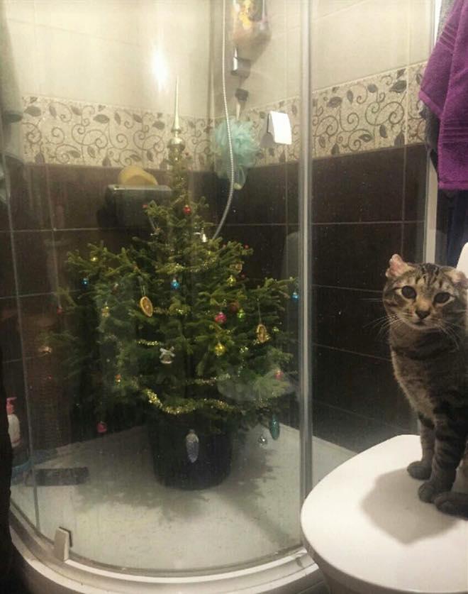 χριστουγεννιάτικο δέντρο μέσα σε ντουζιέρα και γάτα κοιτάει με απορία